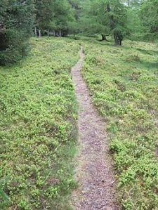 Cow-path_along_the_edge_of_Turk_Wood_-_geograph.org.uk_-_413659